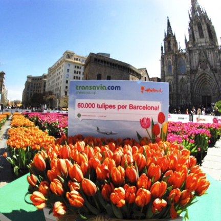 Tulip donation Barcelona transavia Sergat
